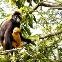 Penang Hill Biosphere Reserve by UNESCO
