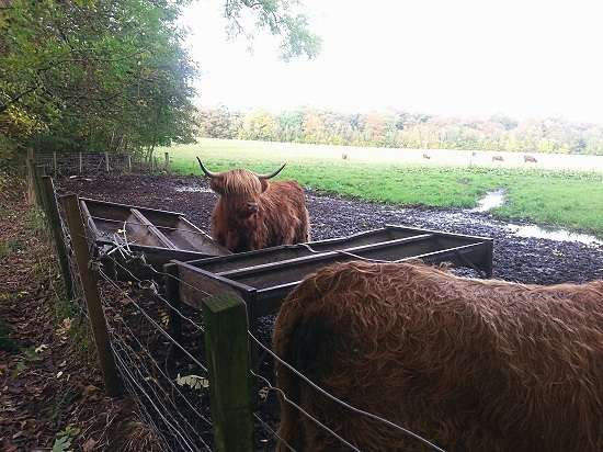 hairy coos Burrell Collection blog.