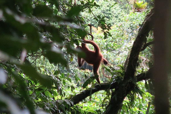 costa rica travel blog rainforest monkey