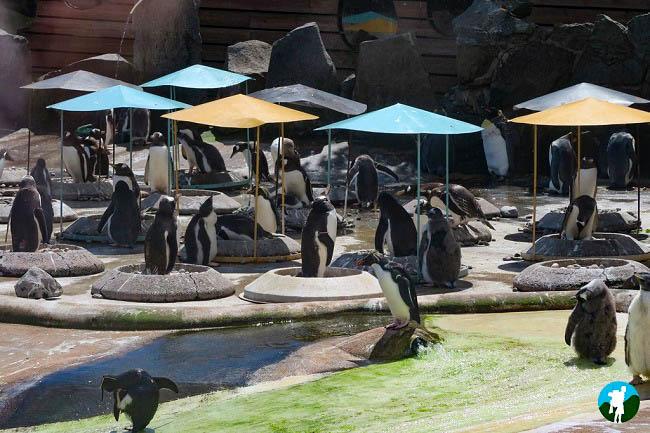 edinburgh zoo penguins fountain court apartments