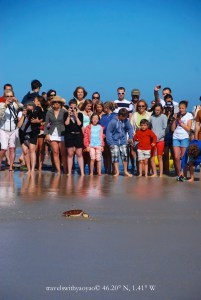 Releasing the turtles on Ile de Ré!