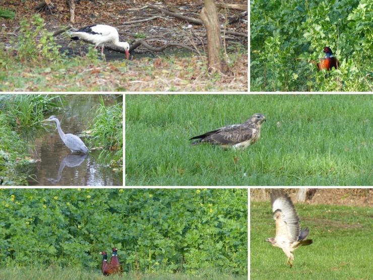 Wildlife im Münsterland
