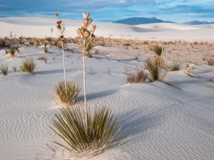 Dunes Drive White Sands National Park Things To Do in White Sands National Park