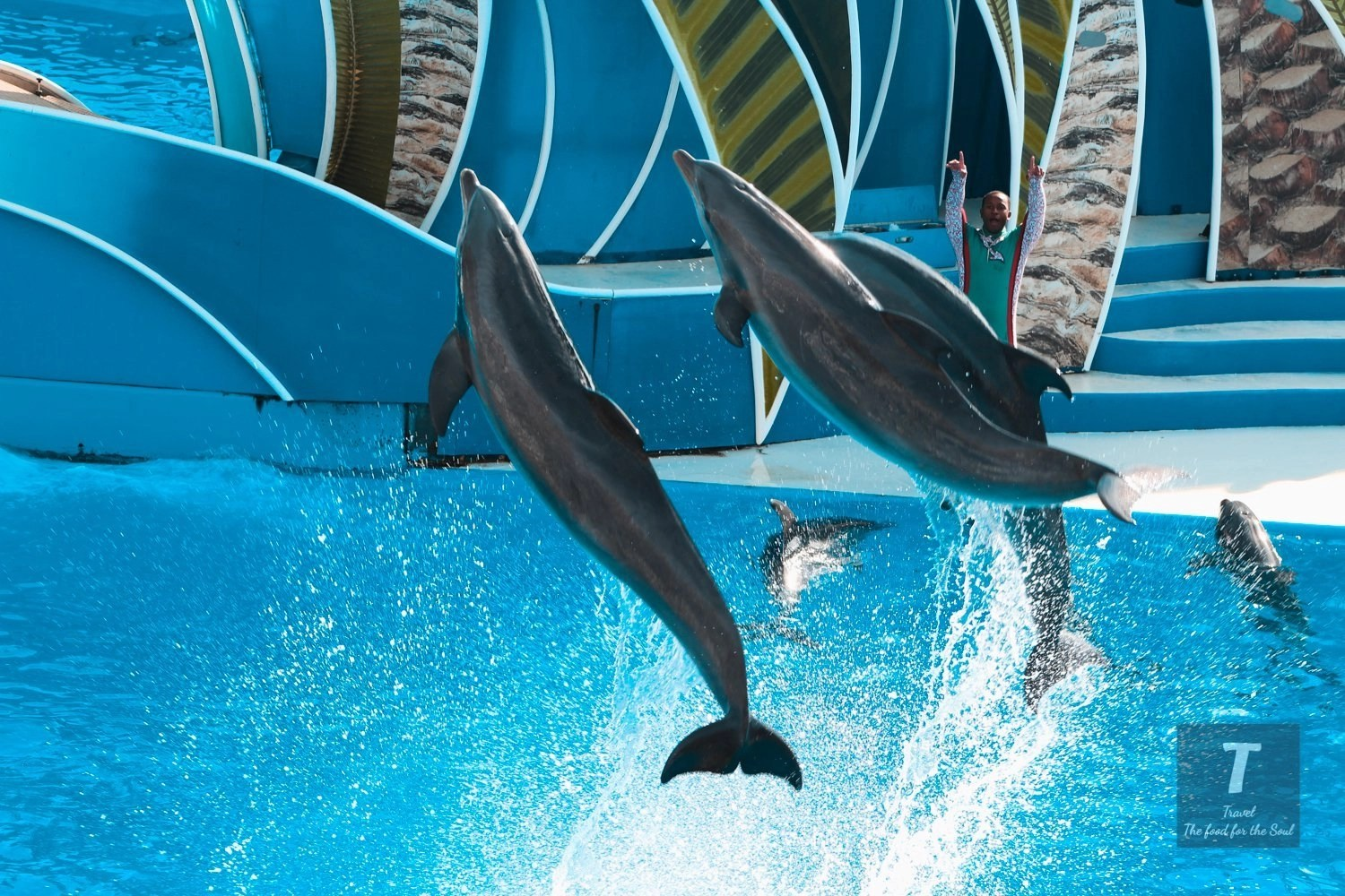 San Diego SeaWorld | San Diego Travel Guide