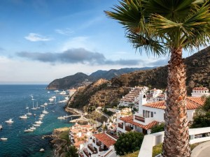 Things To Do In Catalina Island | The Ultimate Guide To Catalina Island