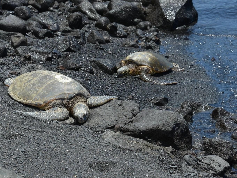 Kau | South | The Island of Hawaii