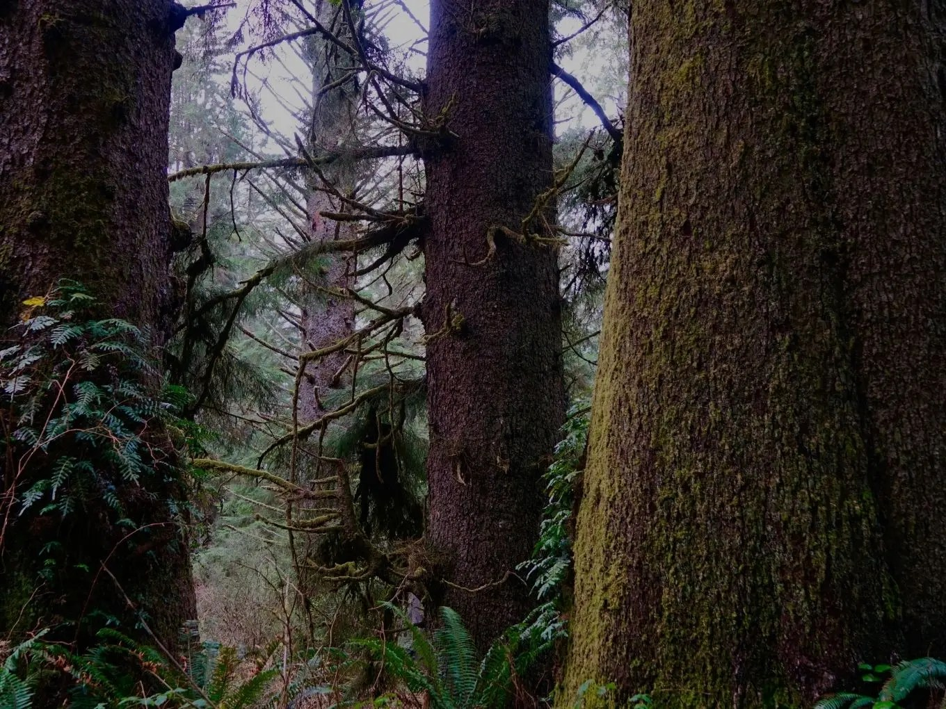 Redwood National and State Parks | California National Parks