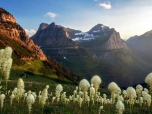 Highline Trail | Haystack Pass | Glacier National Park