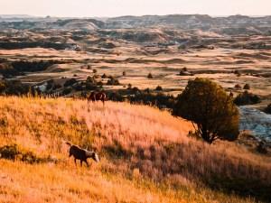 North Dakota Travel Guide