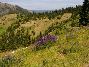Olympic National Park Suggested Itineraries Hotels Restaurants