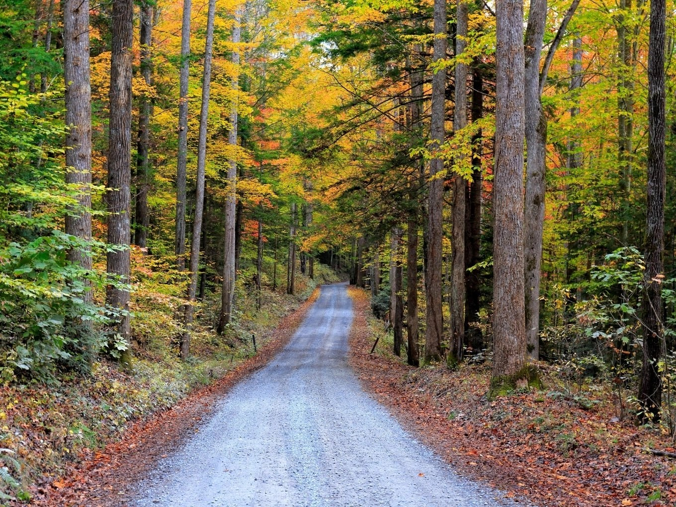 Planning Your Trip To The Great Smoky Mountains National Park