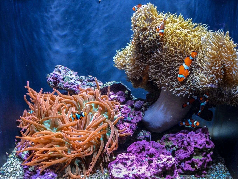 Seattle Aquarium | Seattle