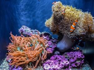 Seattle Aquarium   Seattle