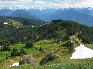 The Ultimate Travel Guide To Olympic National Park