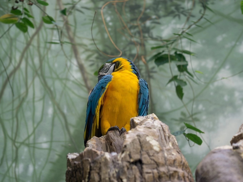 Woodland Park Zoo | Seattle