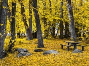 Lodging & Dining In Upper Peninsula of Michigan