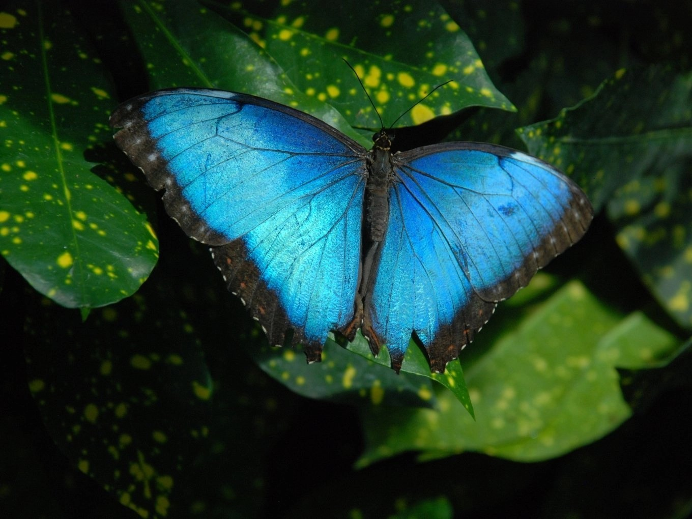 Nature and Butterfly Conservatory | Key West