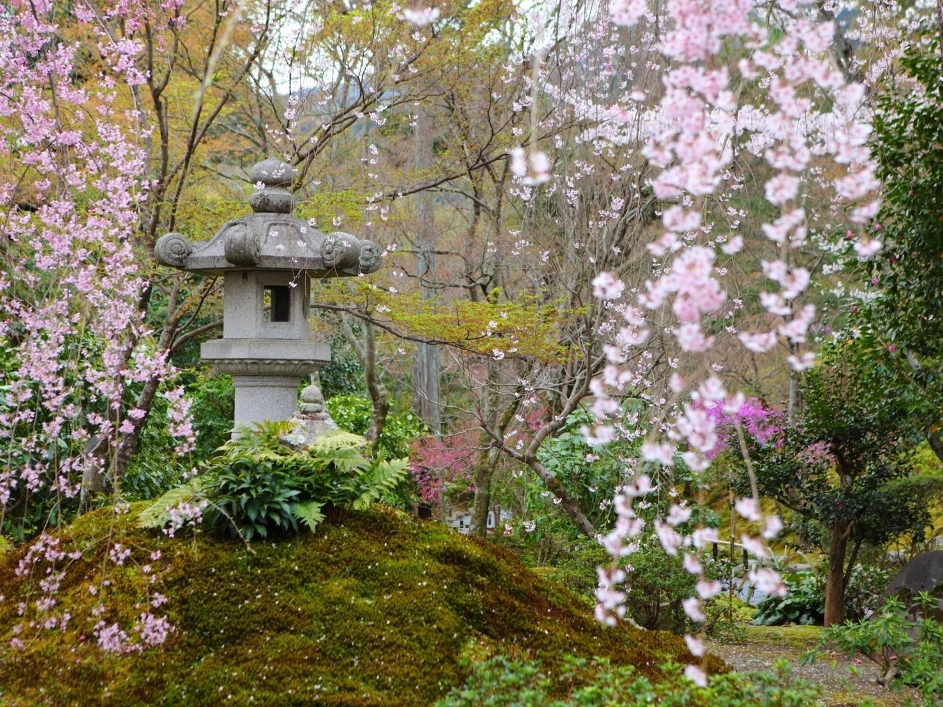 Planning Your Trip To Anderson Japanese Gardens