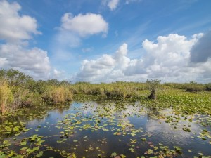 Southern Section - Homestead   Everglades National Park