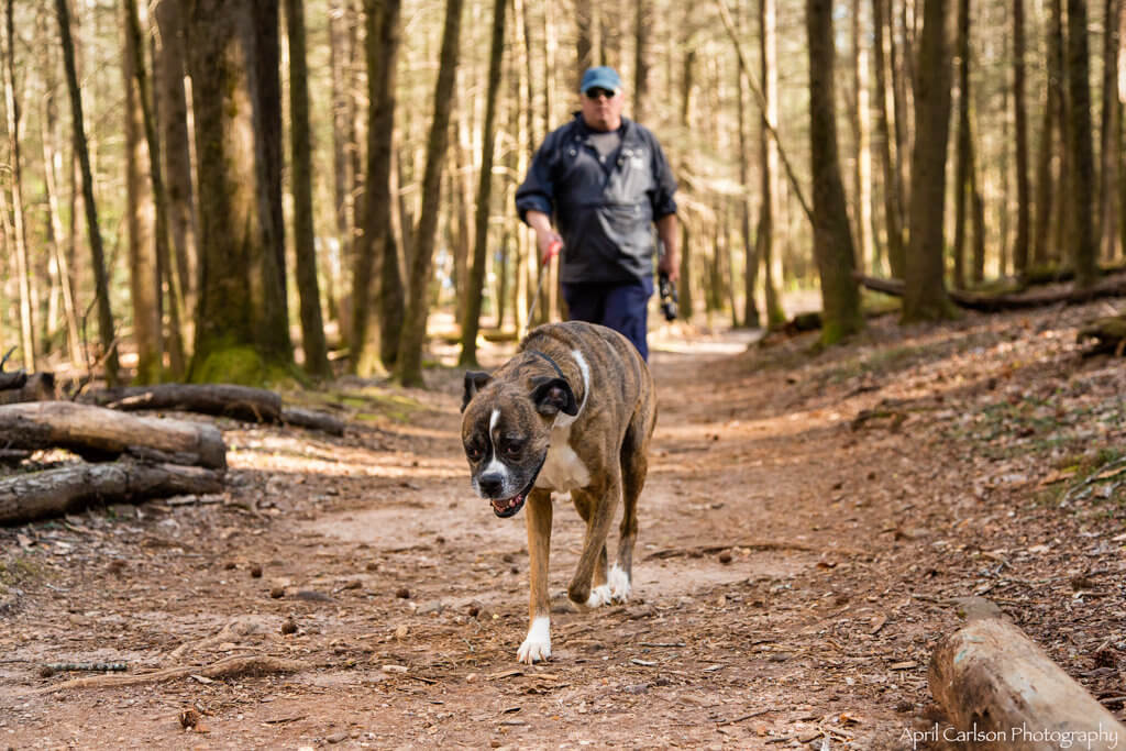 Hiking DeSoto Falls: Man and dog on trail