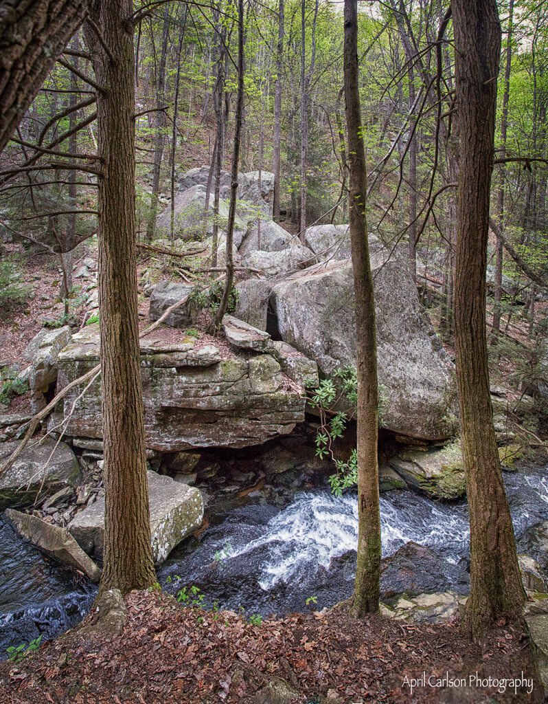 Visiting Cloudland Canyon State Park: Trial