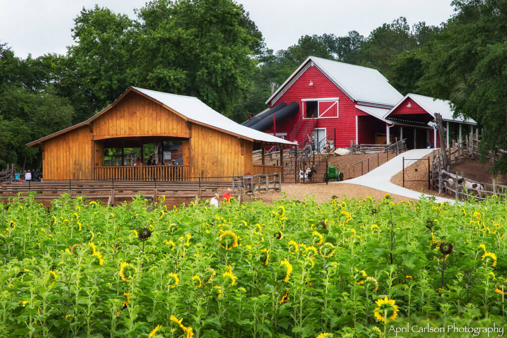 Sunflower Festival at Copper Creek Farm: Pony ride barn and playground barn