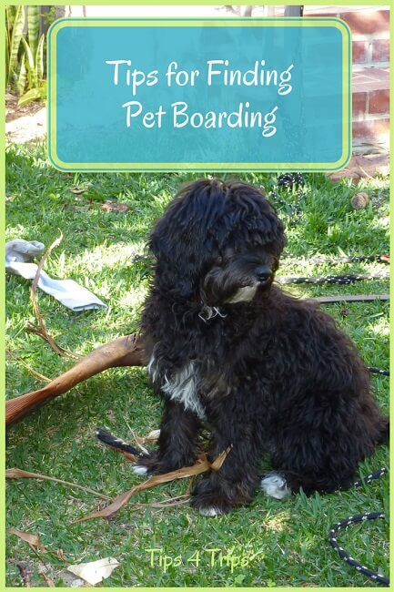 When you have to leave your family pet behind when you go on holiday, following these simple tip for finding the best pet boarding for when you travel