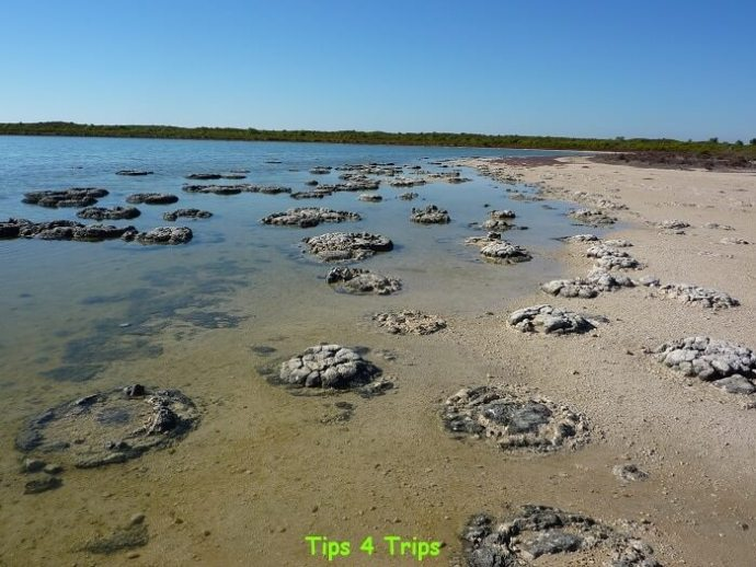 Looking acroos he 3500-year-old stromatolites at Lake Thetis. Learn what to expect at Lake Thetis located near Cervantes and the Pinnacles.