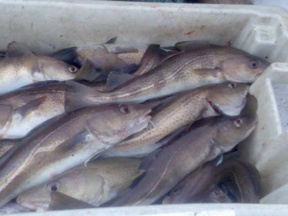 whitby fishin