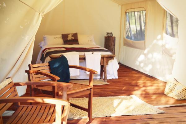 Canopy Camping in Kapiti Island