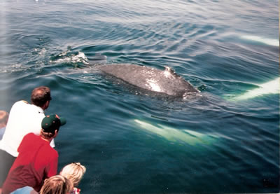 whale watching 03
