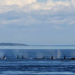 Why Should You Go Whale Watching In Seattle?