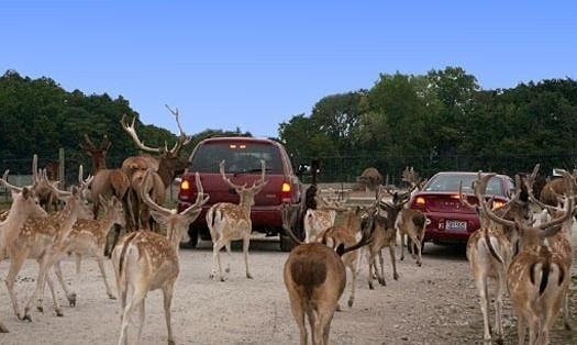 African Safari Wildlife Park 3
