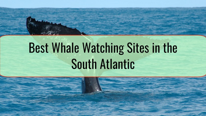 Best Whale Watching Sites in the South Atlantic