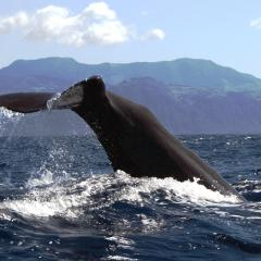 Best Whale Watching Sites in the East Pacific