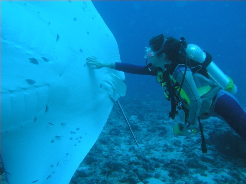Seychelles scuba diving 3