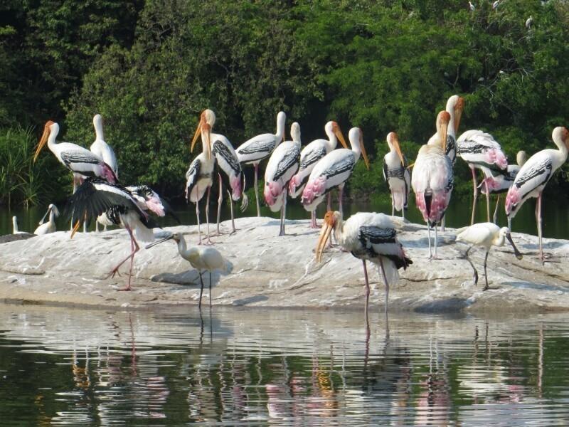 Ranganathittu Bird Sanctuary 3