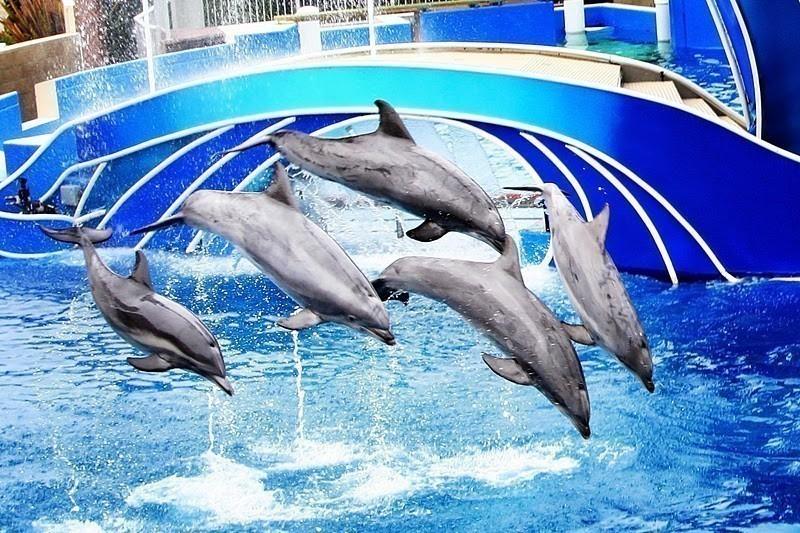 SeaWorld San Diego California Theme Park
