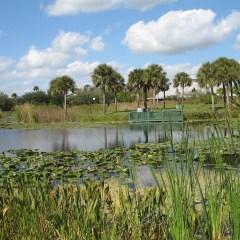 Florida Natural Adventures To Consider