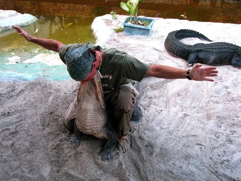 Alligator Live Show