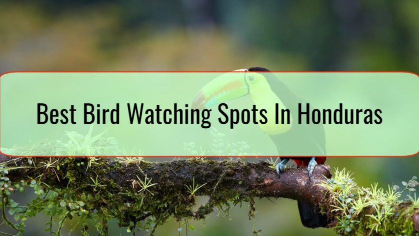 Best Bird Watching Spots In Honduras