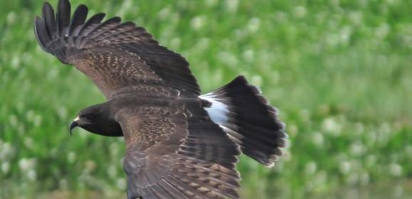 Best Bird Watching Spots In Honduras
