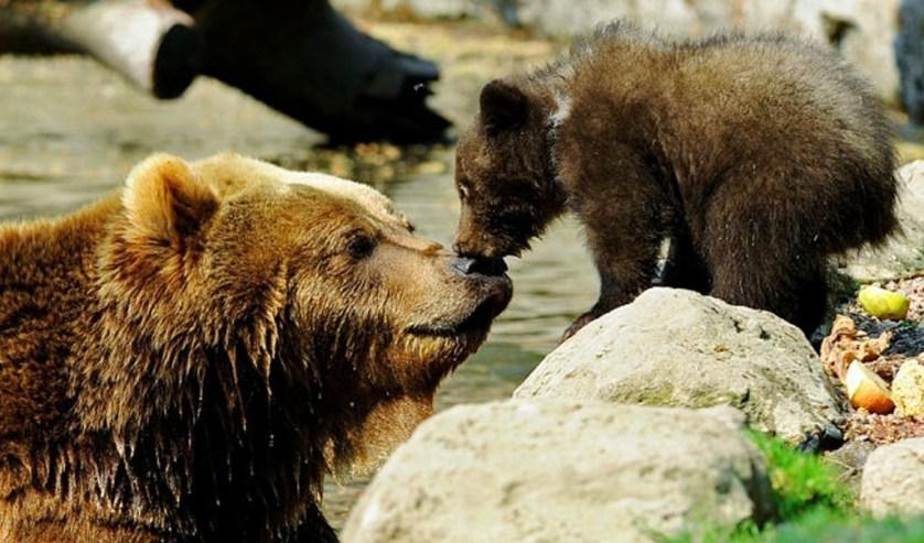 Bear Watching Spots In Alaska