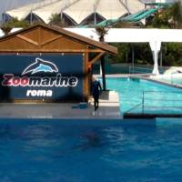 Best Places To Swim With Dolphins In Italy