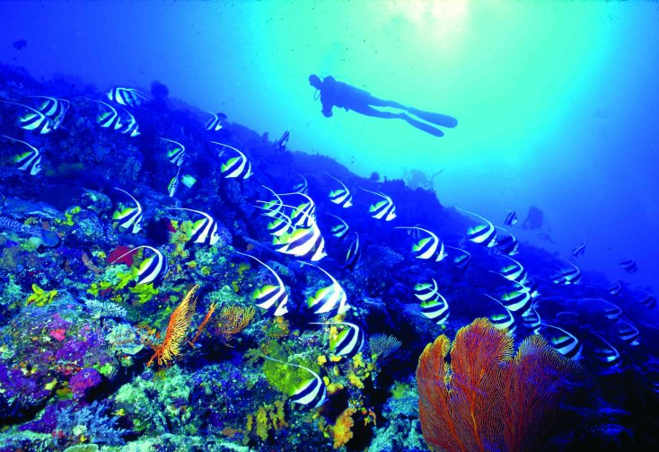 Scuba Diving fiji 03