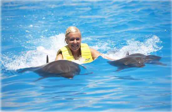 The Cancun Dolphin Swim And Ride Program