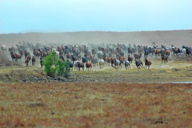 Wild Mustang Watching
