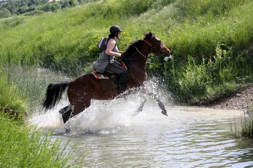 Bosko's Ranch And Croatian Culture