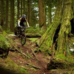 Mountain Biking In North Shore, Vancouver