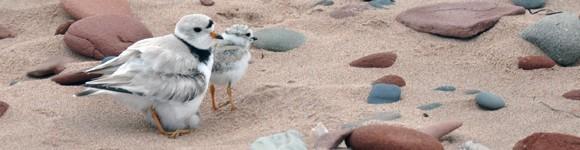 Birding At Prince Edward Island National Park of Canada, Canada